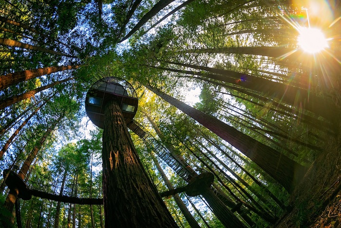 Top 5 Things To Do in New Zealand (North Island) - Redwood forest