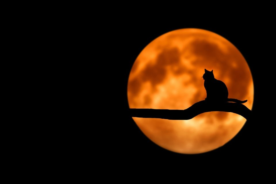 Top 5 Facts You Didn't Know About Halloween