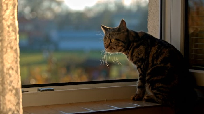 top 5 Thoughts a Cat Thinks Daily - When will human be back