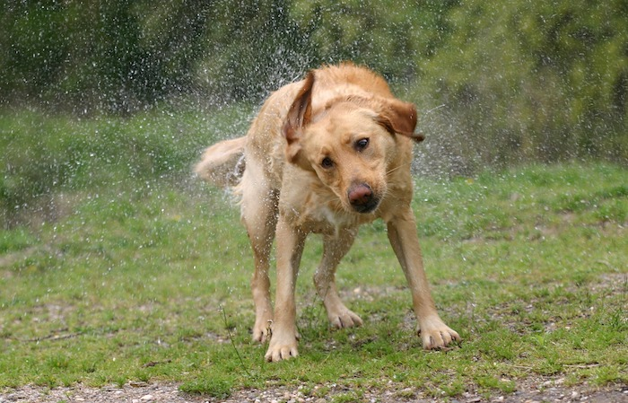 Things to do with your dog on a rainy day - Embrace The Rain