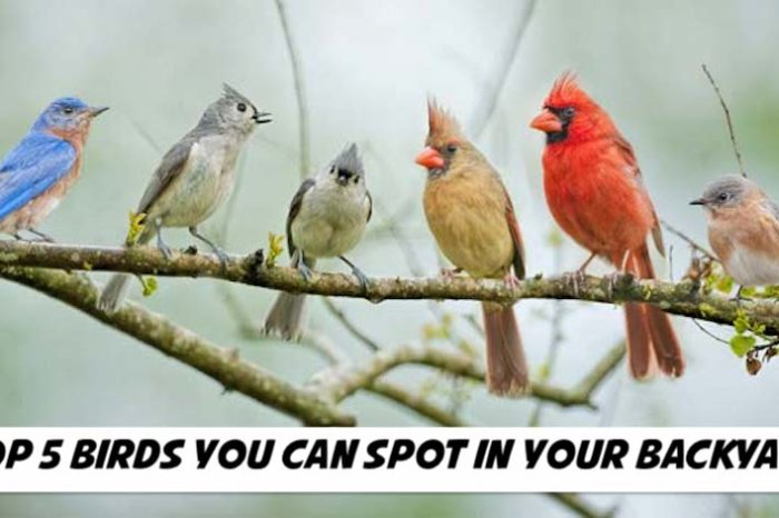 Top 5 Birds You Can Spot in Your Backyard