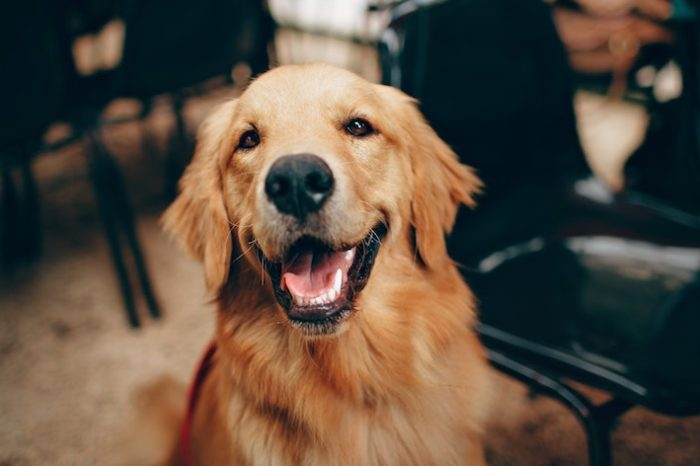 Top 5 Things You Should Know Before Adopting a Pet in College