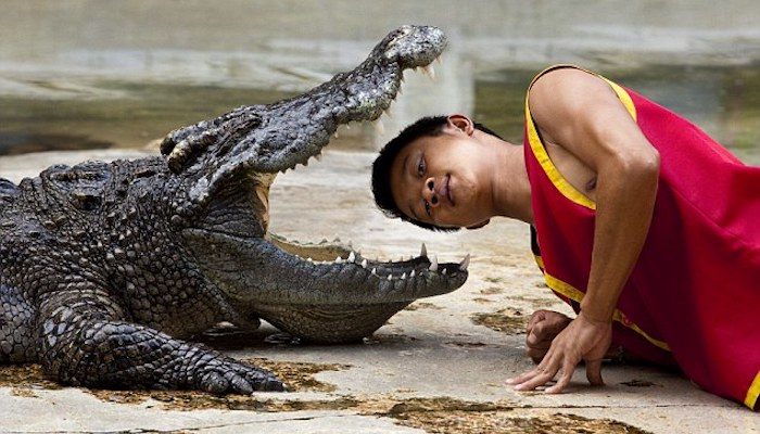 Top 5 of the Most Dangerous Jobs to Have - Crocodile Wrestler
