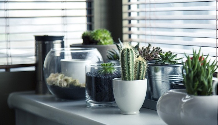 Top 5 Interior Design Hacks to Freshen Up Your Place - Plants