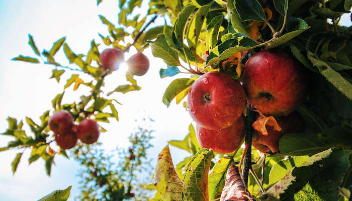 Top 5 Apple Themed Foods to Indulge in This Fall - Fresh Apples