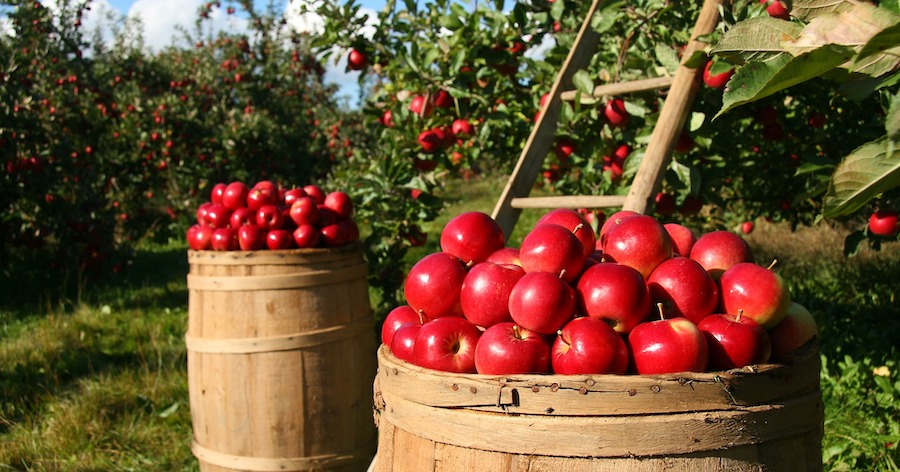Top 5 Apple Themed Foods to Indulge in This Fall