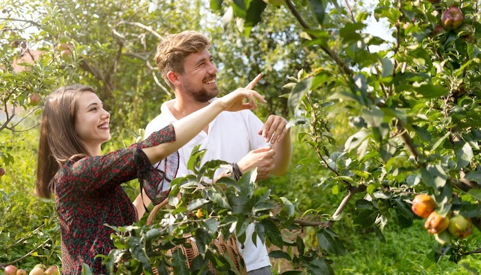 Top 5 Fun Non-Spooky Date Ideas For Fall - Apple Picking
